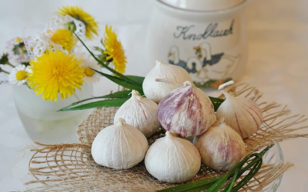 Different Types of Garlic And Its Family Tree