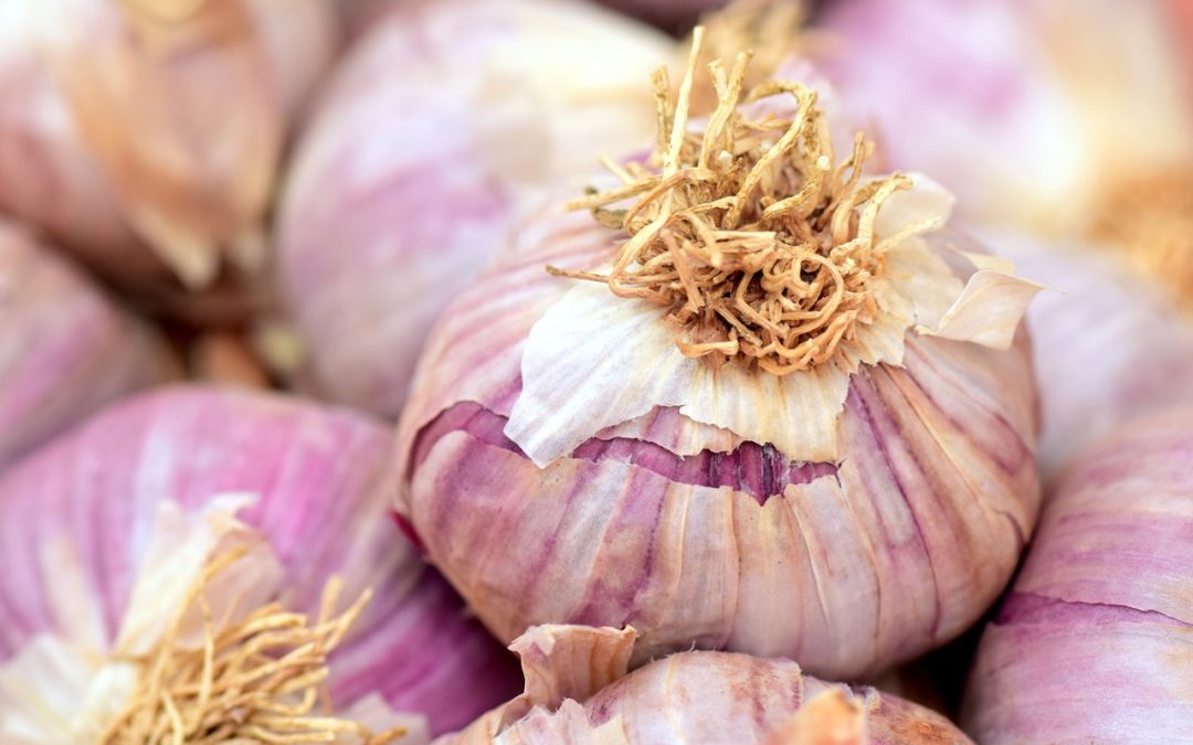 6 Different Methods for Fresh Garlic Storage
